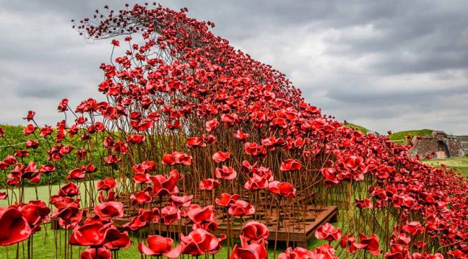 Poppies Wave Fort Nelson