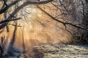 The sun streaming through a mist and frost covered woodland in the Meon Valley Hampshire